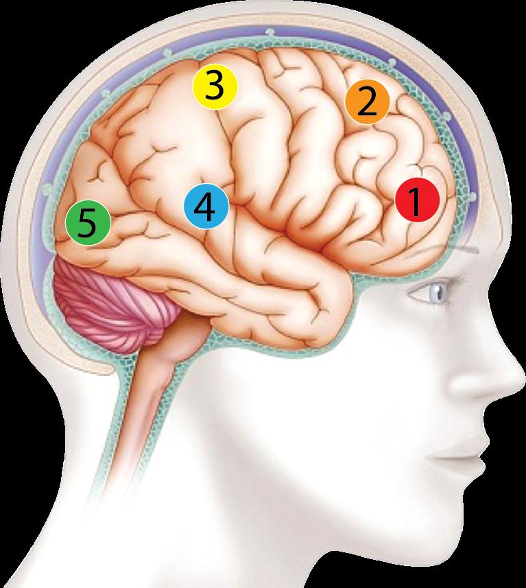 Phương pháp Brainmax Learning Style